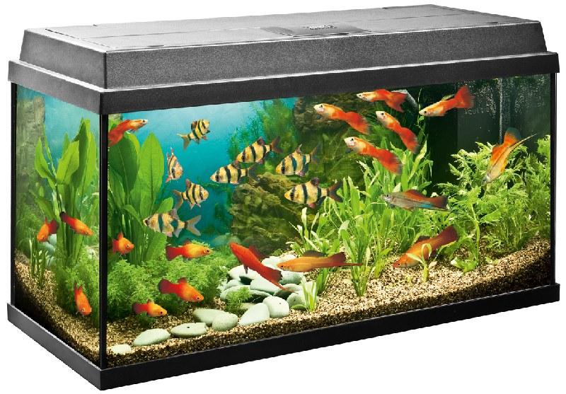 перевезти аквариум
