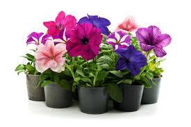 Перевозка цветов при переезде