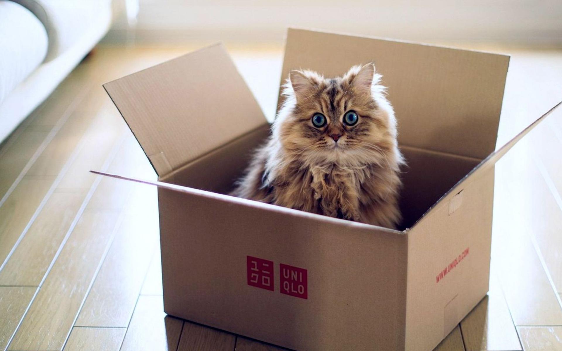 Кошка переезжает в коробке